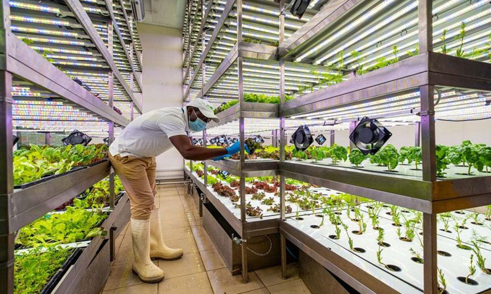 دبي تعتزم بناء مجمع جديد للشركات الزراعية التقنية