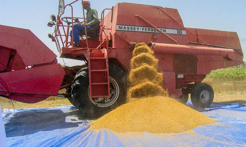 إنتاج محصول القمح في سلطنة عمان يبلغ نحو 2649 طناً خلال الموسم الزراعي الحالي