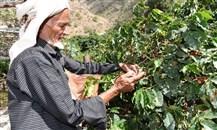 صندوق التنمية الزراعية يدعم تمويل زراعة البن في السعودية