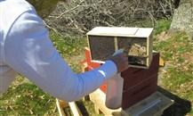 """""""التنمية الزراعية"""" يدعم تربية النحل وإنتاج العسل في أبها ورجال ألمع"""
