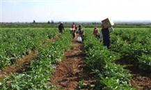 القطاع الزراعي في لبنان: لا قدرة على الانتاج ولا من يدعمون!