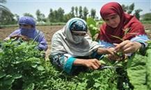 الصندوق الدولي للتنمية الزراعية: للاستثمار في المرأة الريفية
