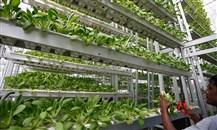 اقبال على الاستثمار الزراعي في الامارات