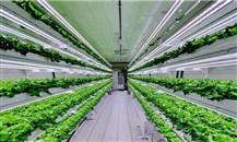السعودية تتبنى الزراعة العمودية وتخصص 27 مليون دولار لتجربتها
