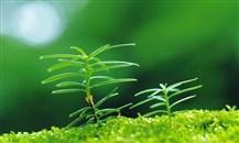 250 مليون دولار من البنك الآسيوي للاستثمار في البنية التحتية للأردن لتعزيز النمو الأخضر
