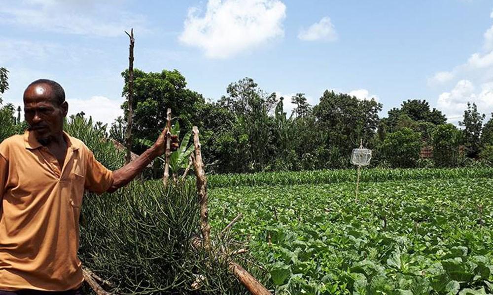 البنك الدولي يمنح أثيوبيا تمويلاً بـ80 مليون دولار لدعم الزراعة