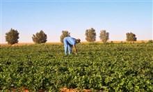 صندوق التنمية الزراعية السعودي يقدّم قروضاً بقيمة 2.688 مليار ريال
