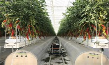 بيور هارفست تستثمر 35 مليون دولار لبناء مزارع ذكية في الكويت