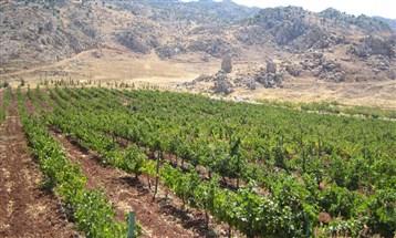 KARAM  WINES أفضل صانع نبيذ ووجهة لسياحة النبيذ في آسيا