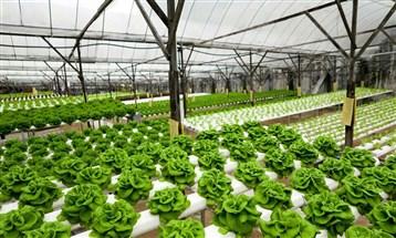 """تعاون بين""""دبي لريادة الأعمال """"و""""غراسيا"""" لإطلاق برامج زراعية تعليمية"""